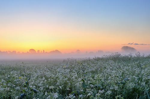 morning light mist misty sunrise landscape dawn nikon mood worcestershire nikkor eckington dawnmist d7000 1685mmvr jactoll