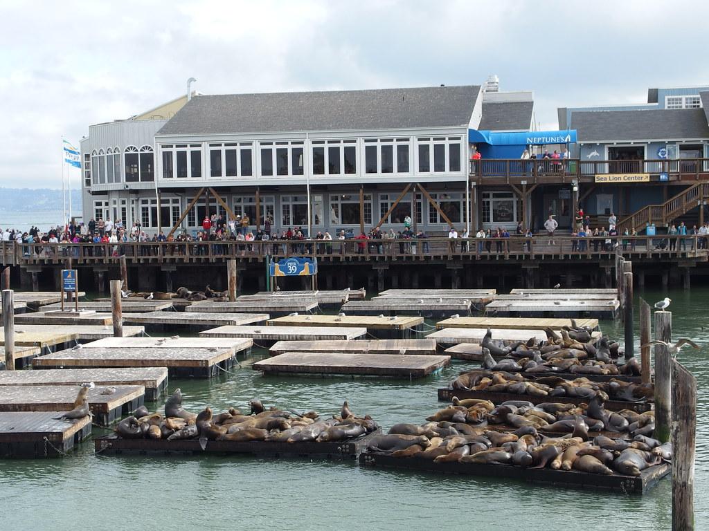 Sea Lion Colony Boat Ride To Golden Gate Bridge San Fr