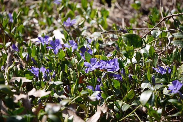 木, 2015-04-16 14:30 - Brooklyn Botanic Garden