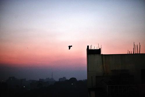 sunset bird rooftop restaurant hotel dusk crow bangladesh gec chittagong wellpark