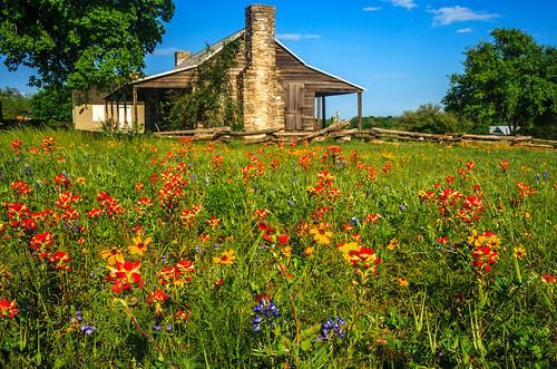 spring texas logcabin wildflowers independence washingtononthebrazos centraltexas