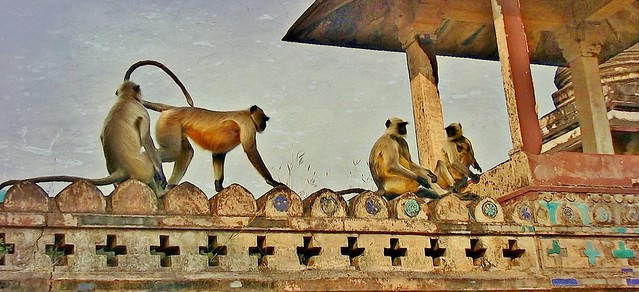 INDIEN, historisches Orchha, on the top of the old palace, 14134/6985