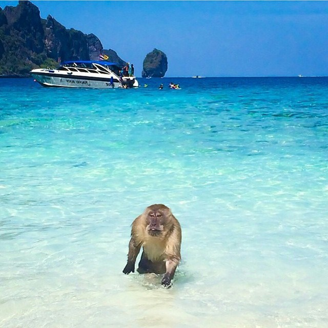 Phi Phi Beach: @fantastic_earth Monkey Beach, Phi Phi Islands, Thailand