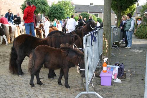 IMG_3584   by paardenmarktameide