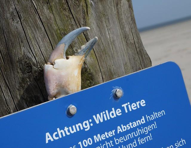 Attention: Wild animals