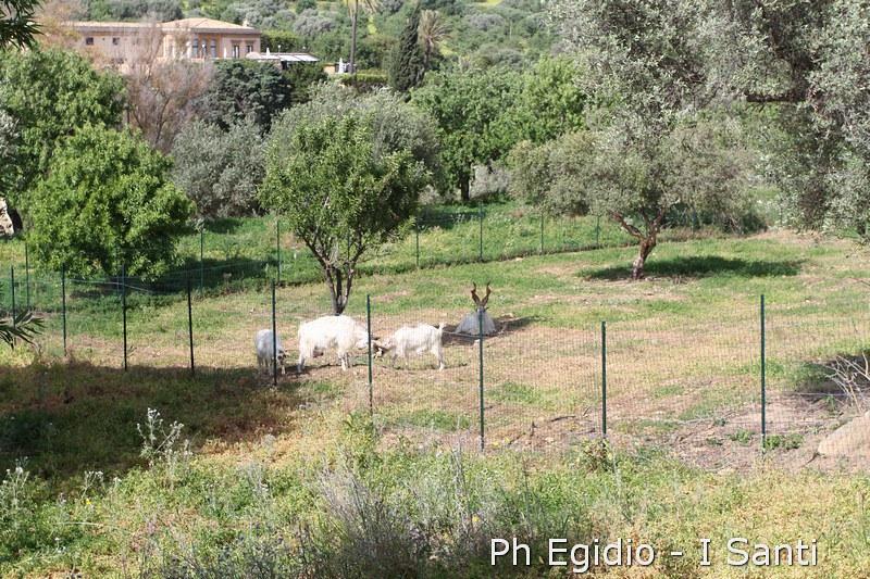 I SANTI SICILIA RUN 25 apr. - 2 mag. 2015 (494)