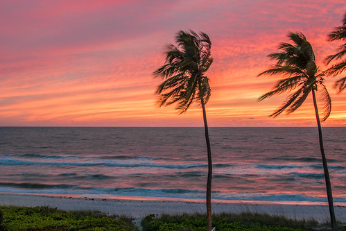 trees sunset sea color tree beach water mexico evening seaside colorful gulf dusk palm shore serene