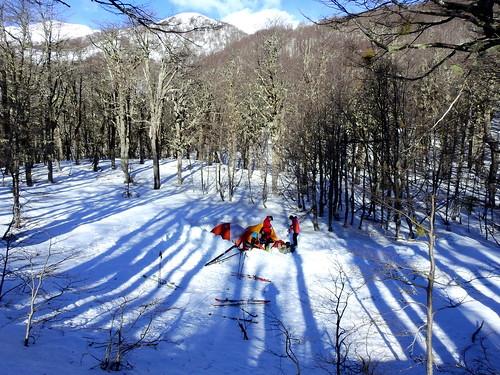 andes chile chilecentral regióndelaaraucanía parquenacionalvillarrica parquenacional lengas nothofaguspumilio bosque forest ski skitour randonné invierno campamento