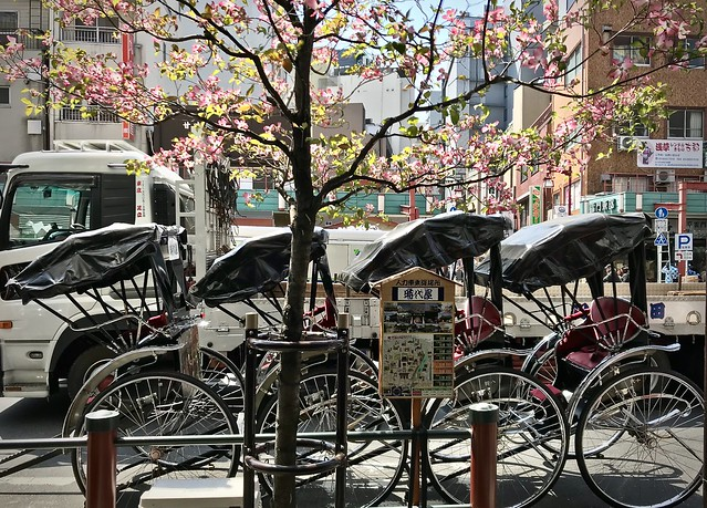 Tokyo street, spring