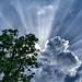 Sunbeam by ayinkosh