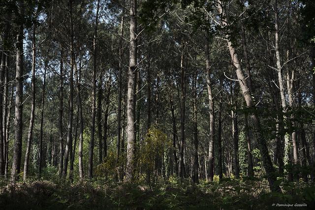 Sous bois en Bas Armagnac