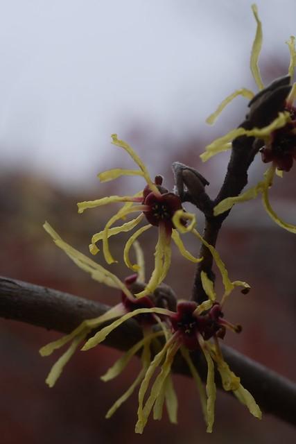 土, 2015-03-28 11:45 - Brooklyn Botanic Garden