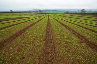 Seedlings and fields near Petworth, Sussex | by Simon Verrall