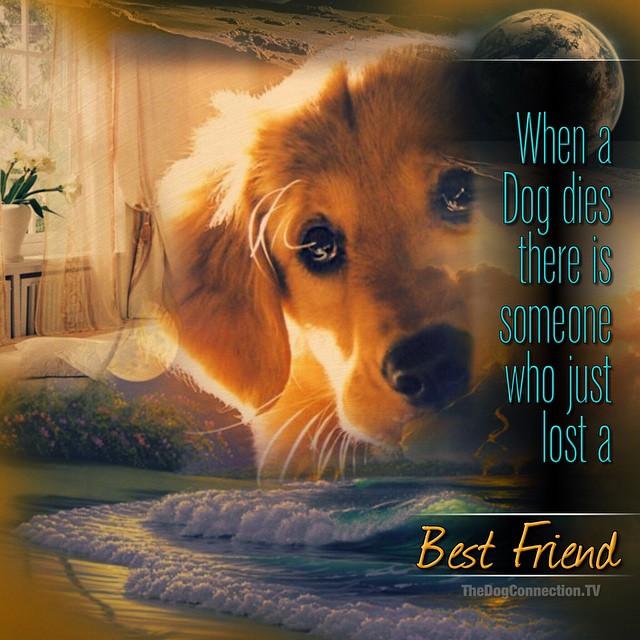 When a dog dies our whole world stops ❤️❤️❤️ #petloss