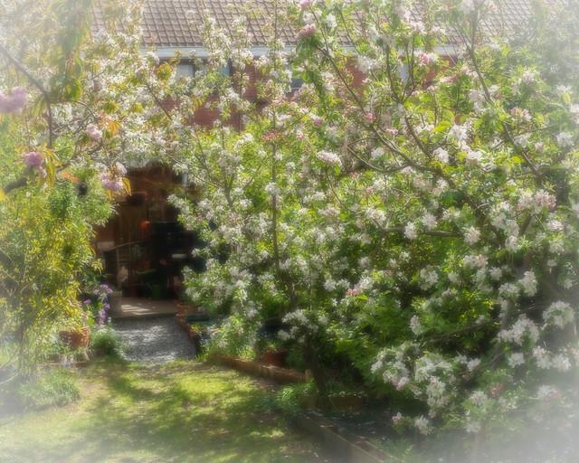 house_20150428_D_0035_orton.jpg