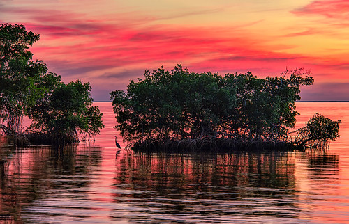 puntagorda puntagordaisles pgi florida fl charlotteharbor harbor water reflections sunset beautiful waves calm surface poncedeleon historicalpark canoneos60d canon 60d heron pink clouds horizon charlotte charlottecounty ripples stevefrazierphotography evening sundown fierysky awesome artistic vines highquality image photo picture photograph photography southernflorida print nature art artwork