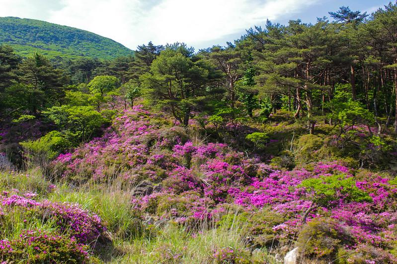 20140601-韓国岳-0038.jpg