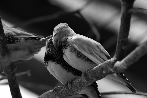 Birds in love <3