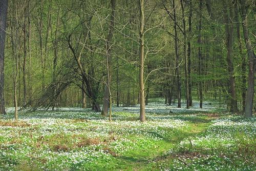 rogów arboretum poland path trees woods flowers spring green nature botanicalgarden