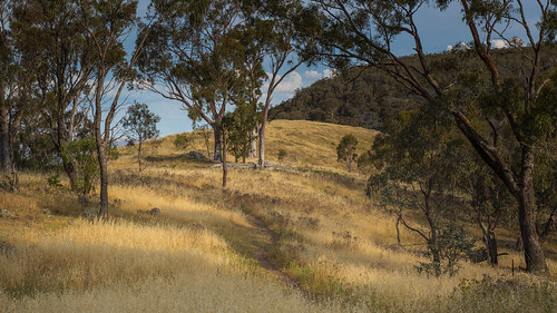 canberra landscape redhill australiancapitalterritory act australia greystump rural copyrightcolinpilliner country countryside straw eucalyptus trees scape australian toggreystump