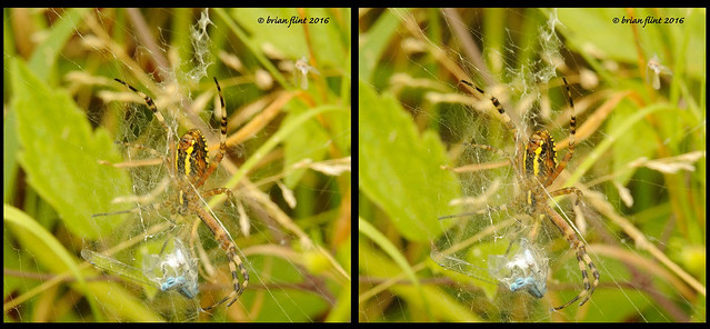 Wasp Spider - 3d cross-view