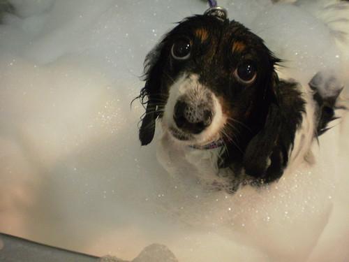 dog bathe