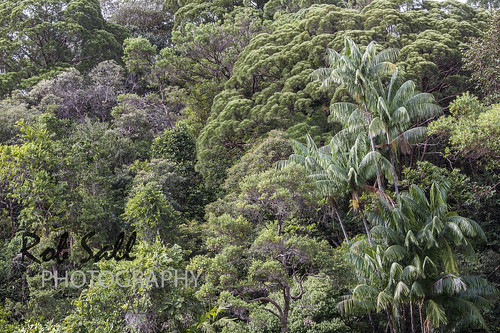 Borneo_WM-773 | by robsall