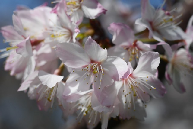 木, 2015-04-16 13:44 - Brooklyn Botanic Garden