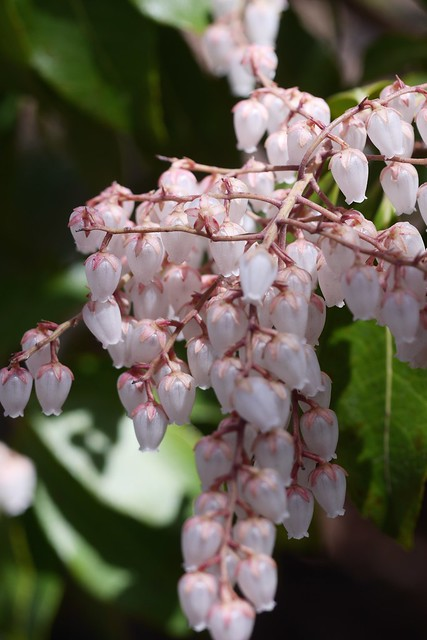木, 2015-04-16 12:38 - Brooklyn Botanic Garden