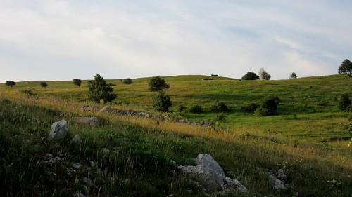 trees wild nature view outdoor hill novivinodolski