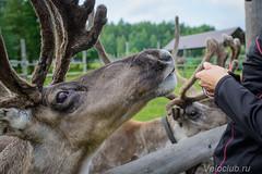 Deers16 (2 of 13).jpg
