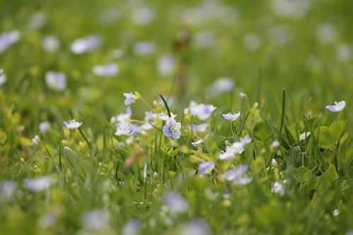 ohio flower green nature canon outside outdoors spring eos5 akron telescoping