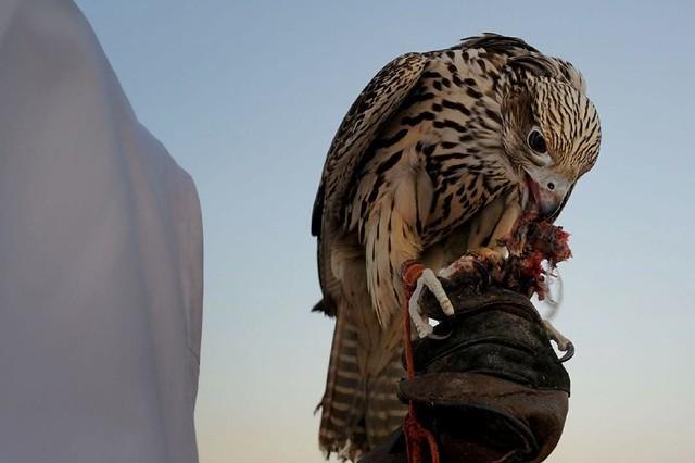 2014|03 - Abu Dhabi (VAE)