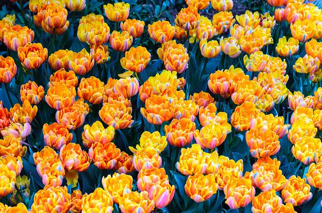 63rd Street and York Avenue flowers, New York City