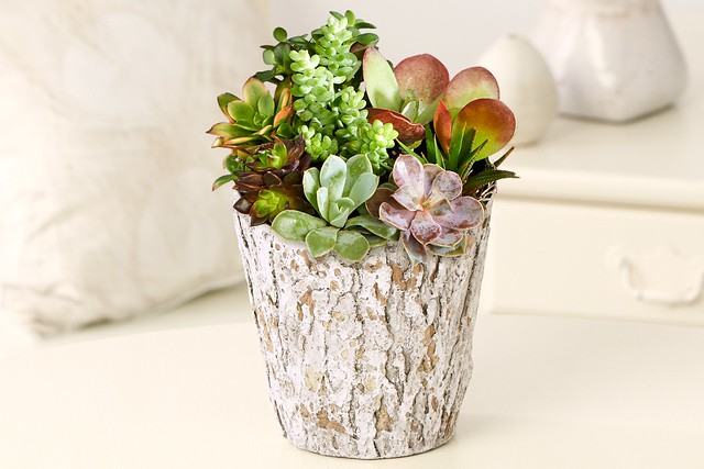 succulent garden potted plant in faux wood stump pot from ProFlowers