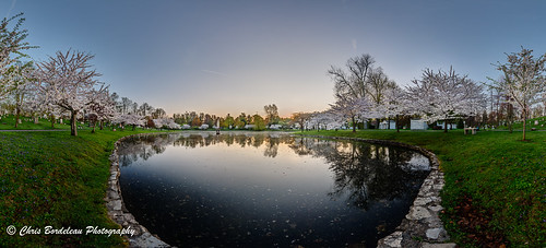 lake fountain sunrise dawn still pond peaceful cherryblossom cherryblossoms buffalony forestlawncemetery buffalonewyork sunrisepanorama bordeleau forestlawnbuffalonewyork cherryblossomsunrise forestlawnbuffalo forestlawnpanorama buffalocherryblossom buffalocherryblossomfestival cherryblossompanorama cherryblossomssunrise forestlawncherryblossoms