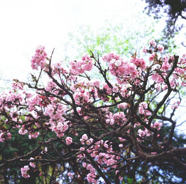 仍然是春暖花開的季節.