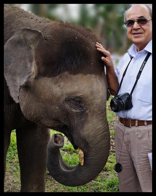 Elephant : Murkal