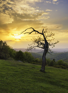 Tree in Floyd County