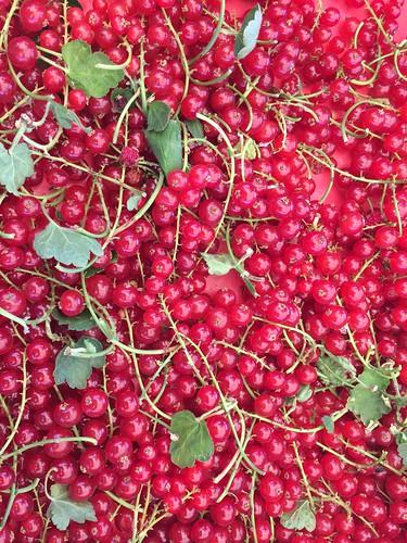Red White & Black Currants Jul 22, 2016 (4)   by toutberryfarms