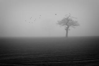 fog, tree, some birds | by james_drury