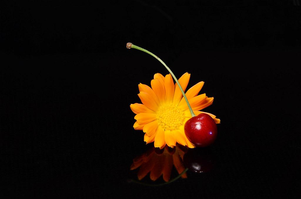 Cherry + common marigold