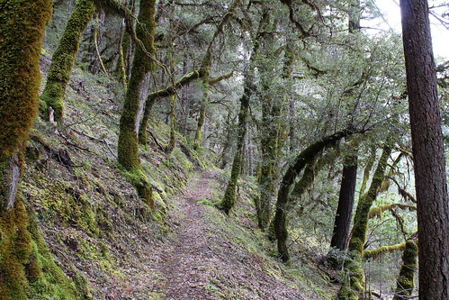 taylor creek english flat rogue river siskiyou national forest oregon hiking briggs galice indian mary park