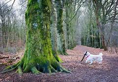Moving trees⠀ #Nijmegen #netherlands #2018 #green #forest #stick #nature #goldenretriever #golden #instagolden #laila #tree #mistery #unique #sweet #nikon #nikonphotography #nikond5200 #photonirt #day #goldenlove #unpalo
