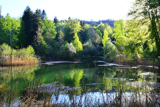 Franzosenweiher in Spreitenbach