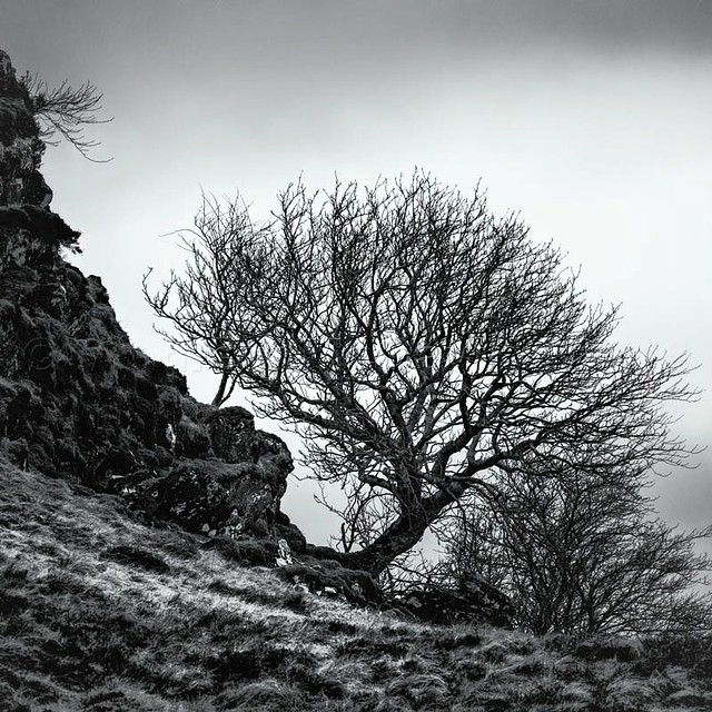 Another of the wee tree...