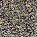 Gravel and Grass / 砂利(じゃり)と草(くさ)