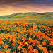 Fields of Orange by Extra Medium