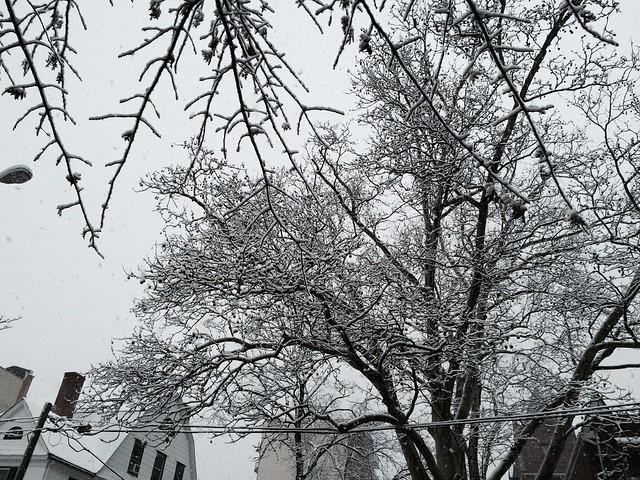 金, 2015-03-20 17:12 - Snow