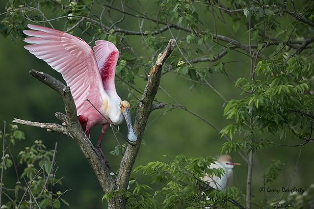 A Pink Beauty!!!!!!............D800